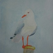 Fiskmås. Akvarell av Jan David Lindgren